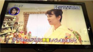 テレビ神奈川 放映 着物ドール プロジェクト 全国展開 お花の先生 ダイヨ 折り紙