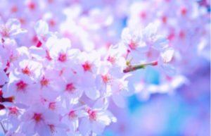 桜の下で撮影会