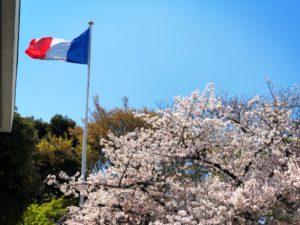 桜満開のフランス大使館にご招待
