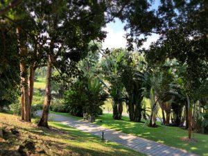 世界遺産の植物園